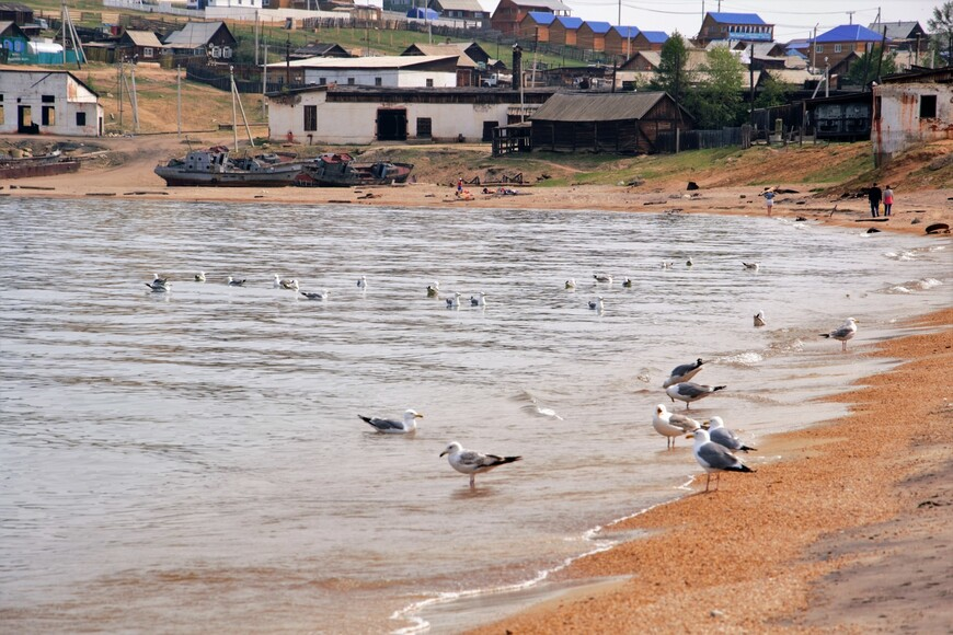 Чайки возле поселка Хужир. Конечно сам поселок обескураживает своей беспорядочностью и разрухой