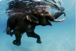 Слоны из сафари-парка в Японии получили прозрачный бассейн
