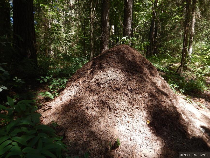По пути встречаются вот такие муравейники.