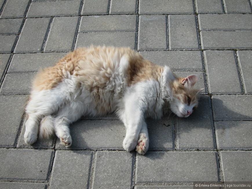 Монастырский кот, который с удовольствием позировал и мурлыкал.
