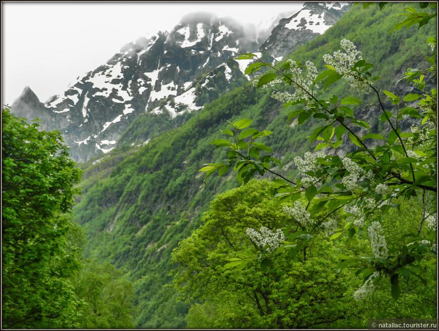 По календарю-июнь, но цветение деревьев в горах не в диковинку. Это кажется черемуха.