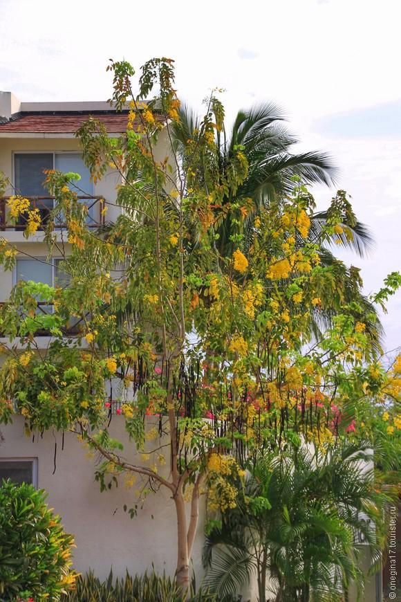 В конце апреля город утопал в цветущей глицинии.