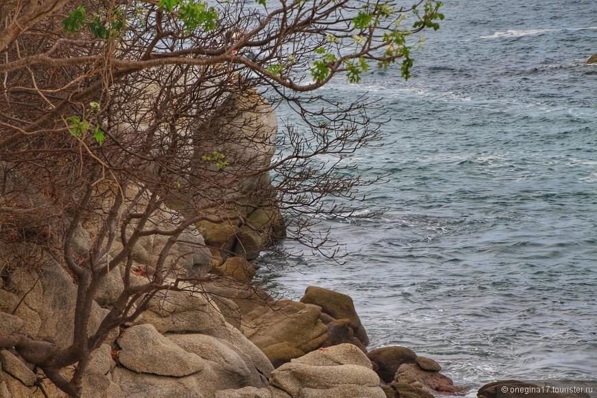 Первые дожди вызвали появление первых листиков на деревьях. Листва совсем не похожа на нашу весеннюю - в Мексике свои законы природы.
