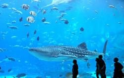 Завтра открывается океанариум на ВДНХ