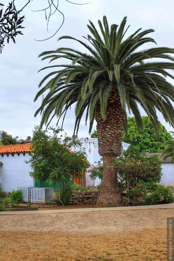 Но выпадаешь из этого портала в самое неприметное место, отмеченное самый обыкновенной пальмой, впрочем, сулящей немалые чудеса.