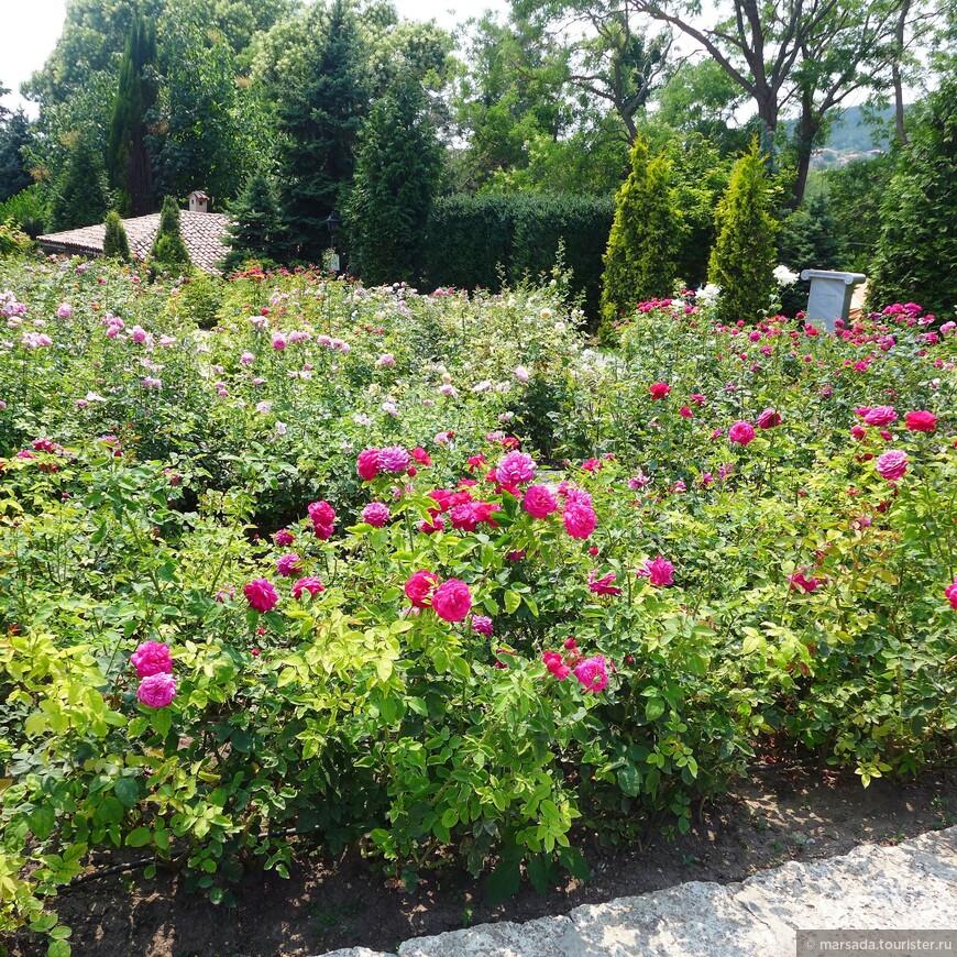 огромная коллекция знаменитых болгарских роз