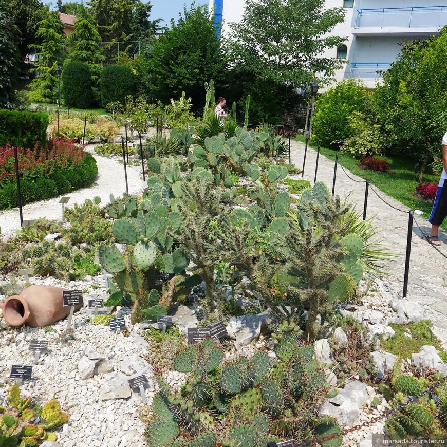 Гордость Ботанического сада - аллея кактусов-великанов. Некоторые из них достигают пятиметровой высоты. О кактусах заботятся флористы и садовники, высаживая их в грунт только в летний сезон, а зимой оберегая в оранжереях.