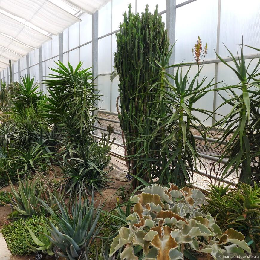 Хоть там и очень душно и жарко - но коллекция кактусов просто потрясает!