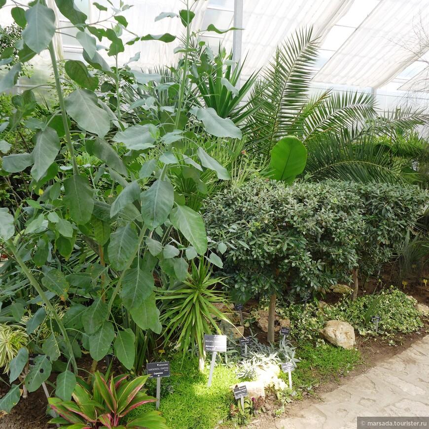 ну и не только кактусов - но и тропических деревьев