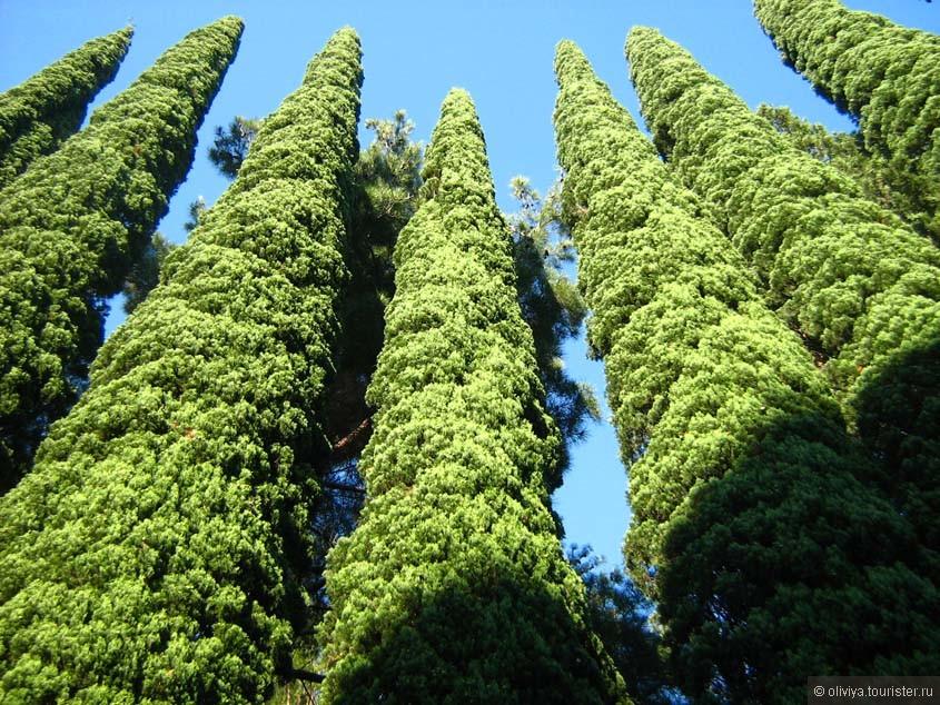 платановые деревья в сочи фото люди