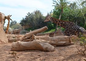 Биопарк и ботанический сад Валенсии