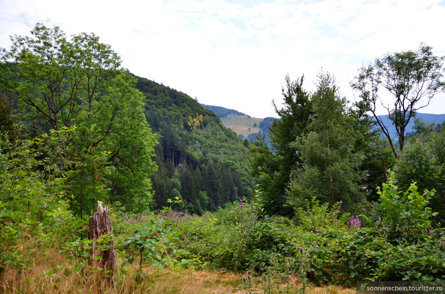 К водопаду ведет удобная дорожка вдоль леса. Шварцвальд – это тот самый Черный лес, куда за приключениями ходили герои братьев Гримм и Гауфа. Даже если не ходили, эти сказки дышат чудесами Шварцвальдского леса, как и он помнит страшных ведьм, сказочных лесовичков и гномов.
