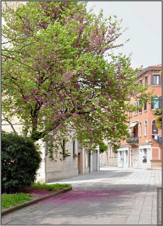 Этот район смотрится более  современно , а  весна раскрашивает все вокруг  в свои нежные краски.