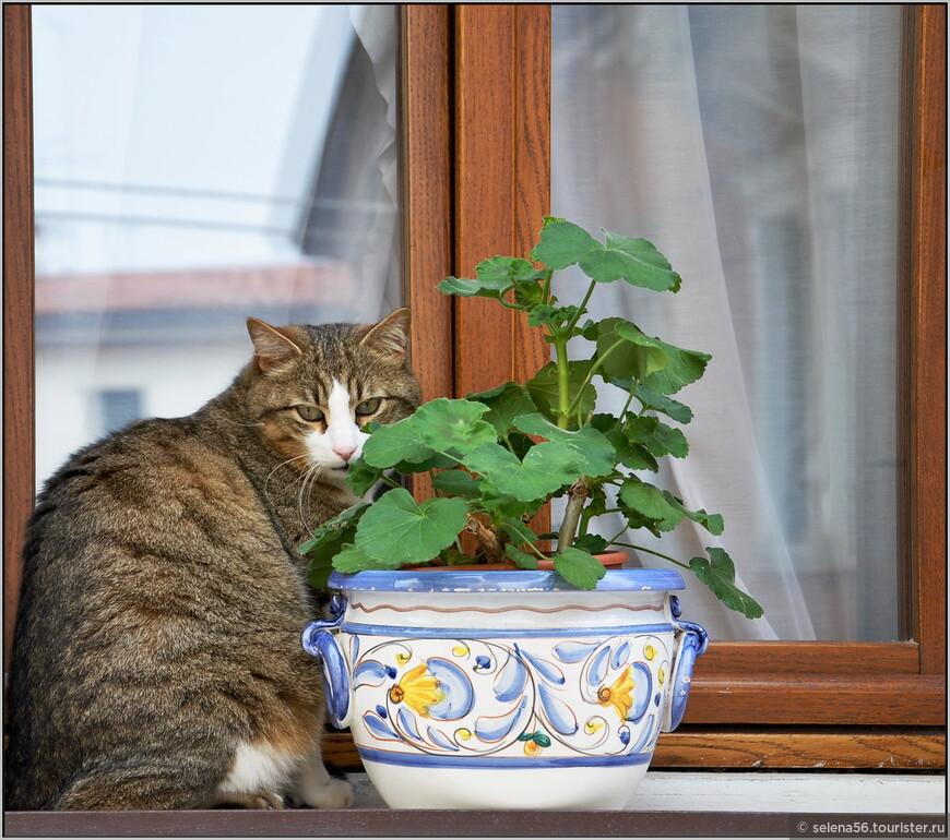 Венеция- город львов и котов, согласно  культурно-историческим  традициям. И сейчас в городе множество кошачьих, как в камне, так и неплохо  здравствующих.