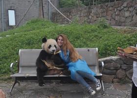 Вчера,волонтер панды