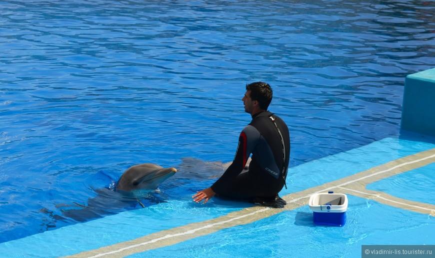К сожалению не было времени остаться на шоу с дельфинами. Но смотреть на тренировки и кормление не запрещается