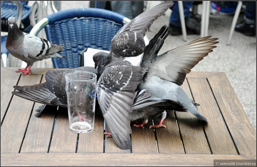 В роще,  у набережной острова, есть кафе, в котором тусуется местная молодежь и голуби.