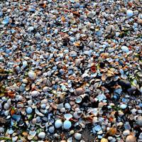 Песчанно-ракушечный пляж.