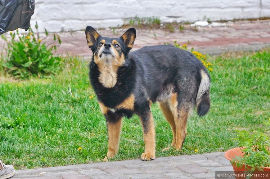 08. Собака – Свияга.
