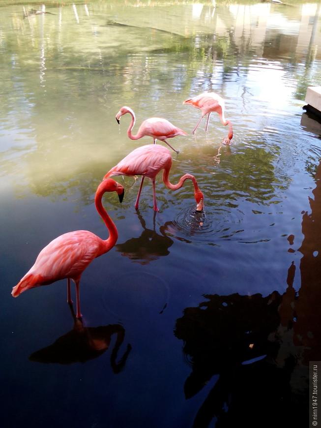 фламинго на территории отеля