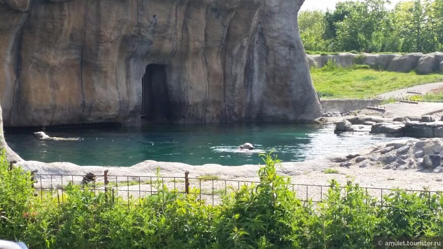 самые молодые обитатели зоопарка - два белых медвежонка - резвились в воде: кувыркались, ныряли и играли с бочкой