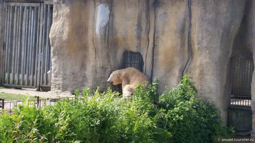 и ... сама медведица, уставшая от жары
