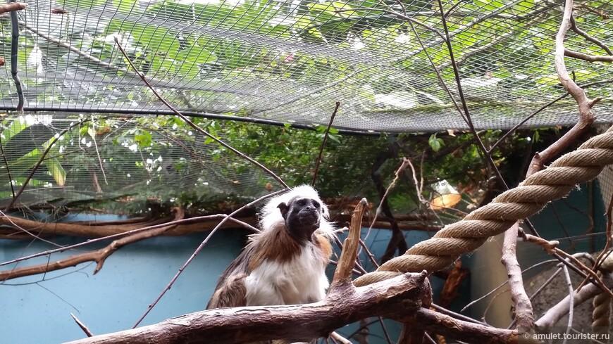 очень забавная обезьянка ... смотрела на всех строго :)