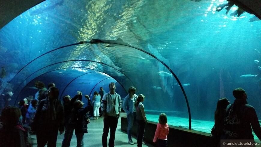 очень завораживает подводный мир, который можно наблюдать со всех сторон