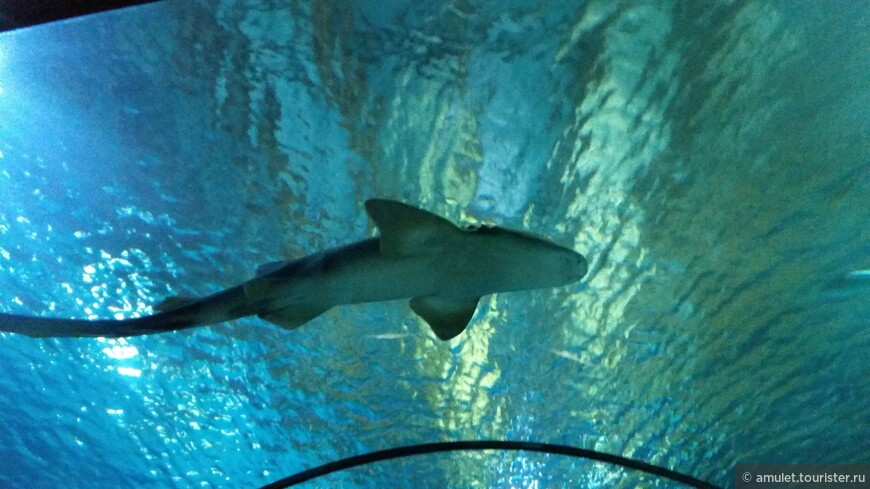 акулу вызывали?