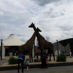 Зоопарк в Роттердаме
