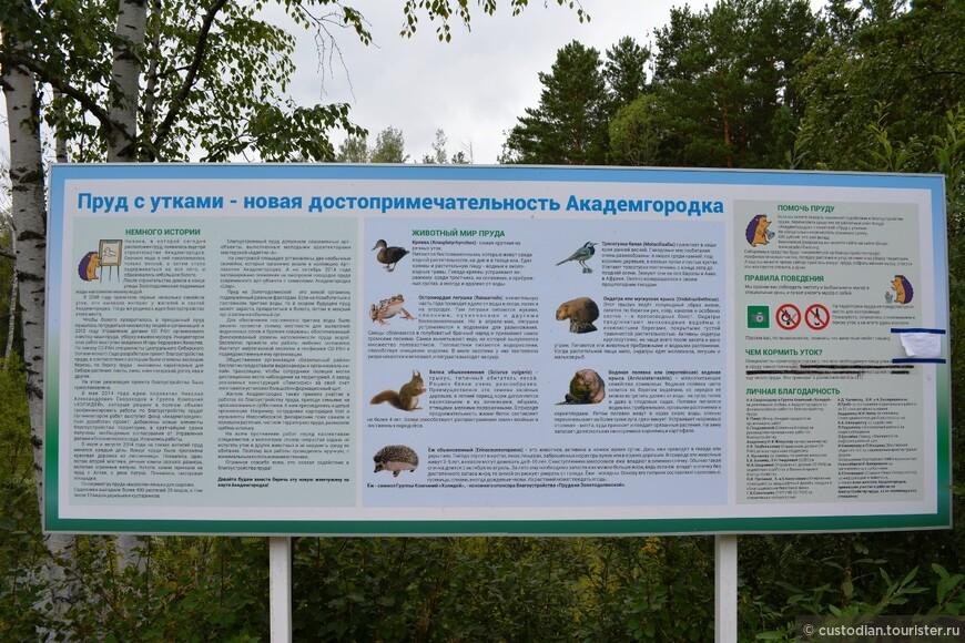 Пруд с утками в Академгородке - описание