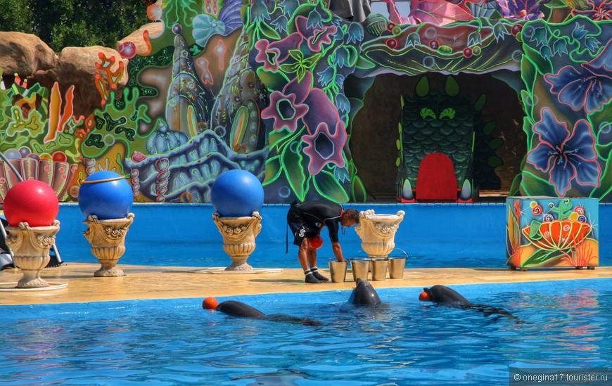 Если быстро-быстро перебраться в дельфинарий, то успеваешь к началу шоу дельфинов.
