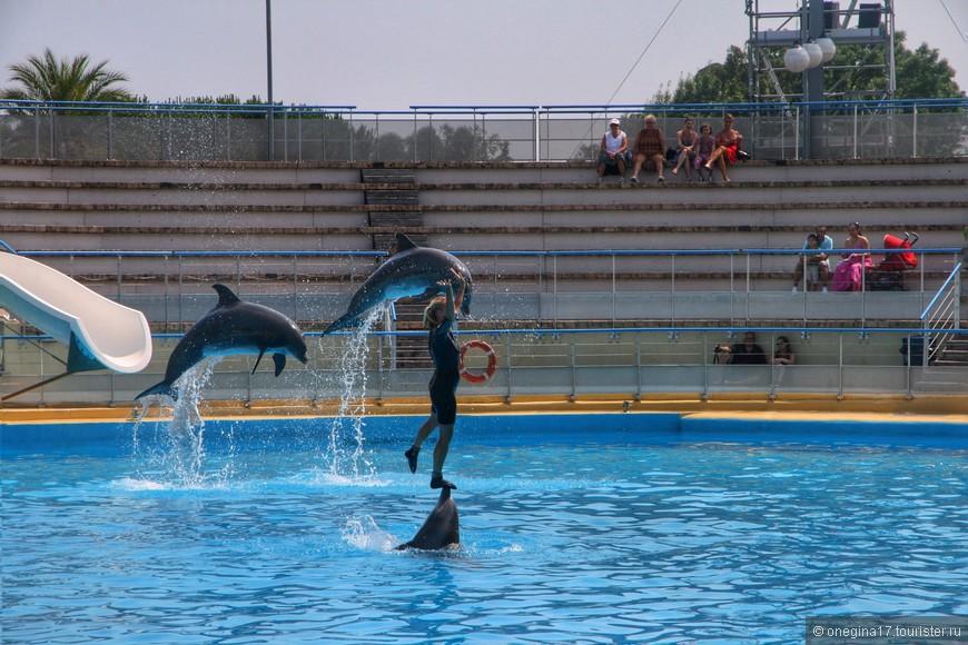 Потрясает шоу дельфинов чуть меньше, чем шоу касаток, но то, что творят дельфины, касатки повторить увы, не смогут - размеры мешают...
