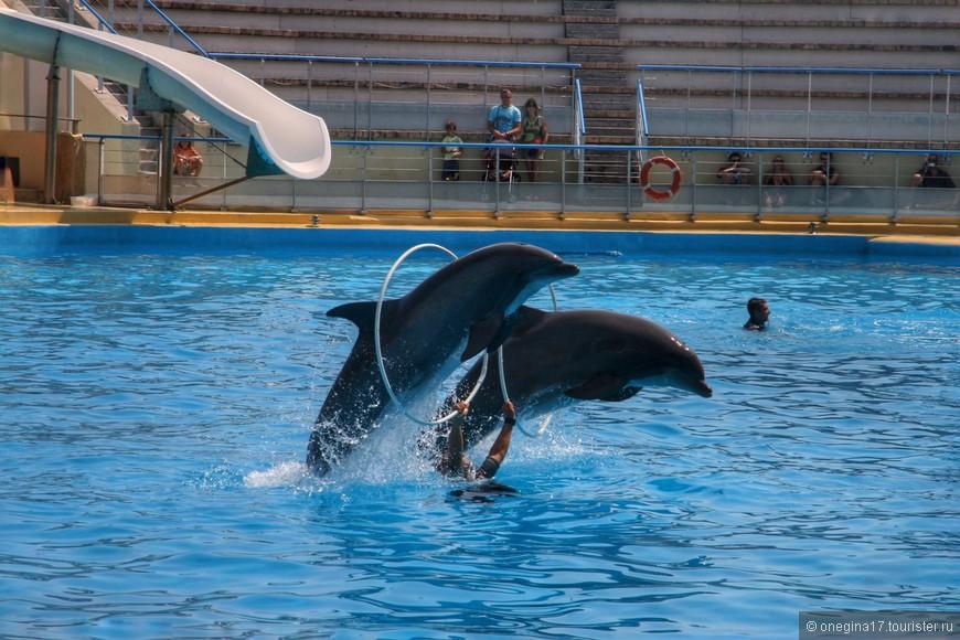 Говорить о том, что дельфины умнички, наверное, не нужно, это и так все знают.
