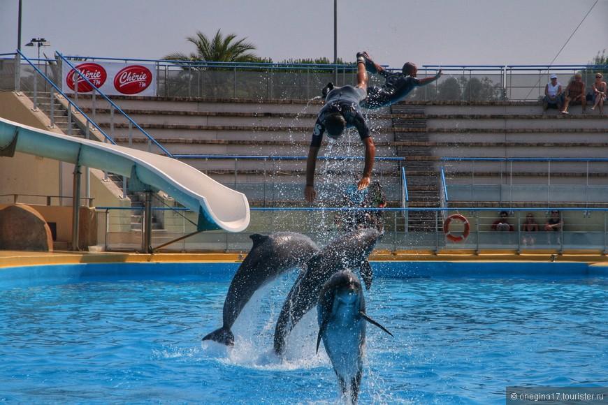 Дельфины тоже летают...