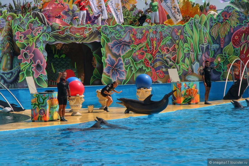 Дельфинов явно огрочило окончание шоу и они долго уговаривали дрессировщиков повторить его еще раз.