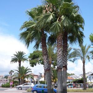 """Кань-сюр-Мер - самая уютная гавань Лазурного берега, или Усадьба """"Колетт"""" - последнее вдохновение Пьера Огюста Ренуара"""