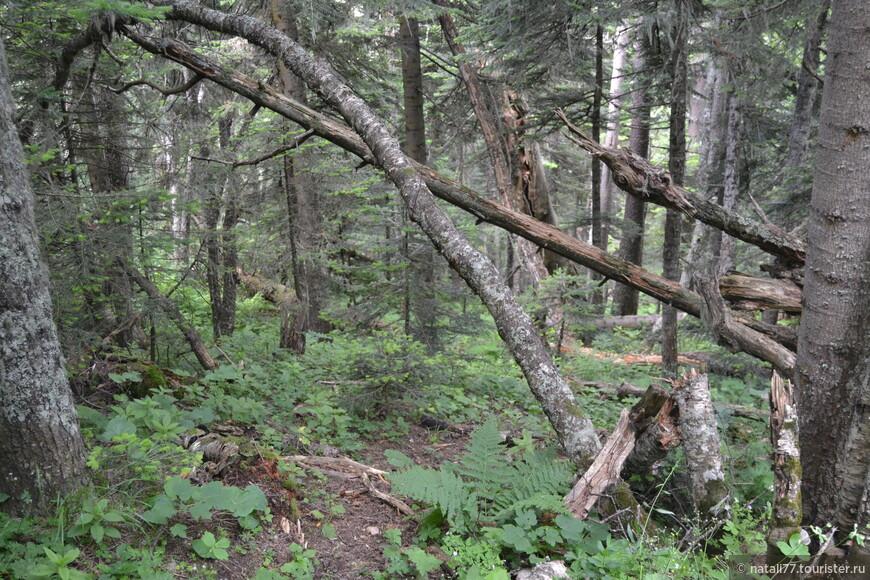 а в лесу буреломы и....