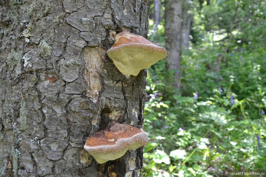 ....море грибов.