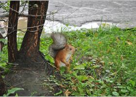 Сам парк в такую пасмурную погоду после ливня впечатления не произвел, а за белок, которые там скакали, я ему все простила. Этой белочке достался грецкий орех.