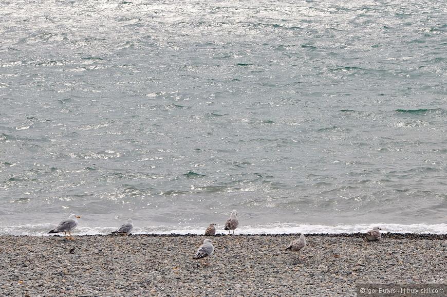 15. Чайки скучают на берегу, холодно – они прилетели рыбачить.