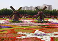 И снова парк цветов Miracle Garden