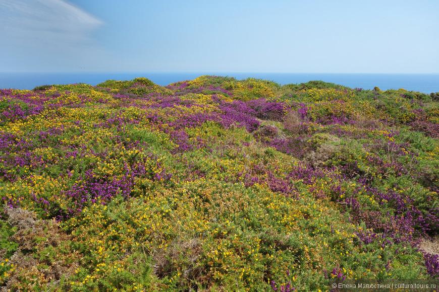 Цветение в Нидерландах бывает не только в мае
