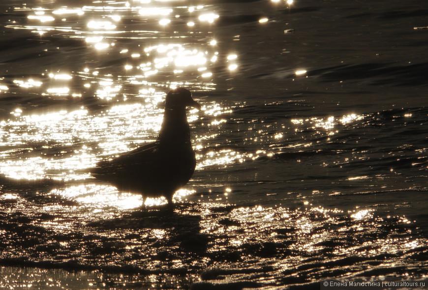 Чайка на закате - неотъемлемая достопримечательность побережья Северного моря