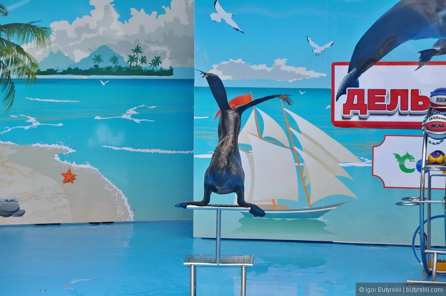 23. Вход в дельфинарий также бесплатный, но представления проводятся всего несколько раз в день, тут необходимо будет свериться с расписанием.