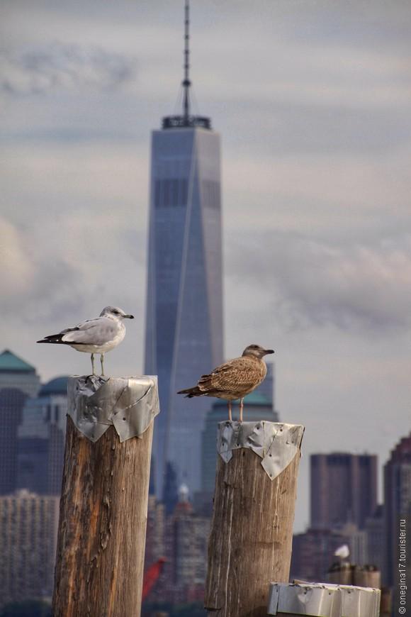 Чаек на острове очень много, они нахально садятся на статую, правда, больше предпочитают вид на Манхэттен.