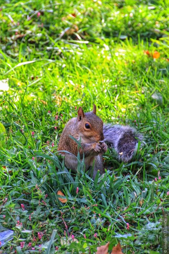 Белки там потешные. Впрочем, белок в парках Нью-Йрка великое множество и потом к ним привыкаешь и заканчиваешь фотоохоту.