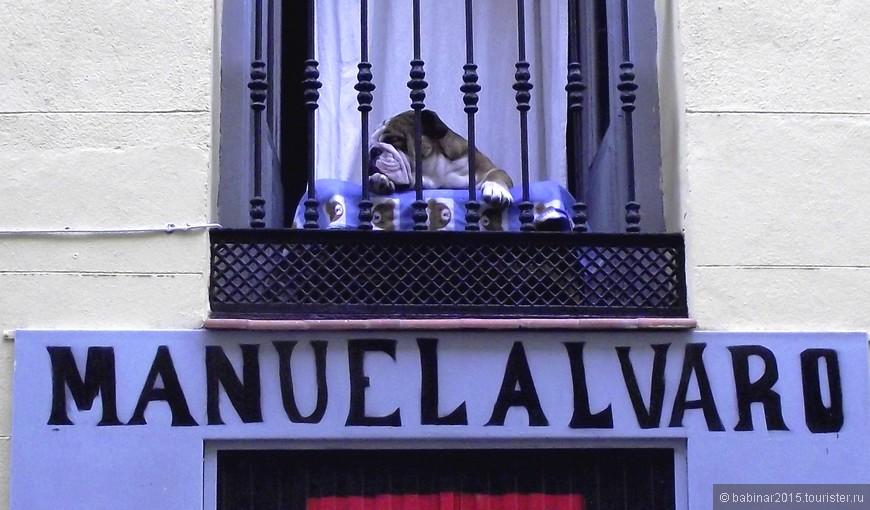 Хоть и называют жителей Мадрида los gatos (коты - за то, что они якобы никогда не спят), этот мадриленьо явно другой породы. На улице Уэртас (calle Huertas)