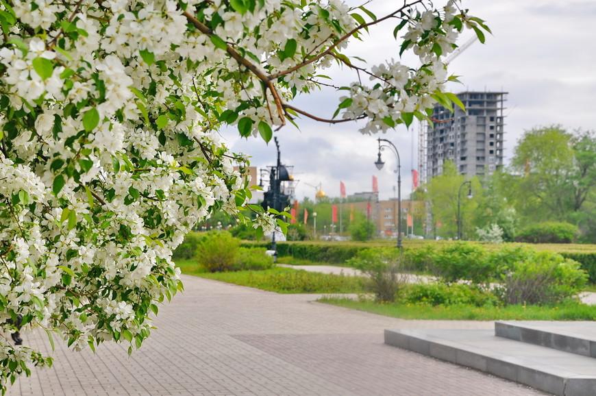 05. Застал майское цветение, стало дополнительным плюсиком от этого места.