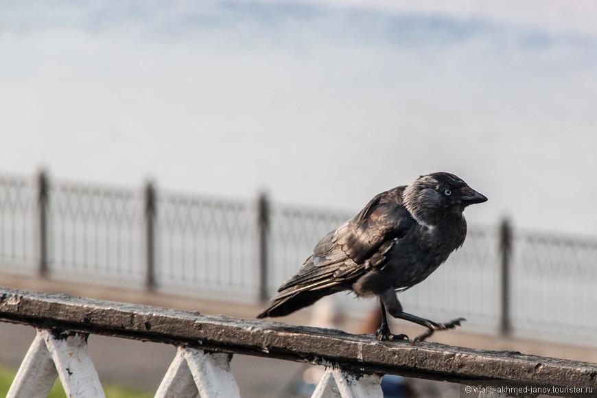 Она идет такая вся, в черных перьях..))